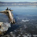 諏訪湖全面結氷のおしらせ